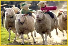 The Big Sheep, great day out for the family, adventure park near ilfracombe, holiday activities